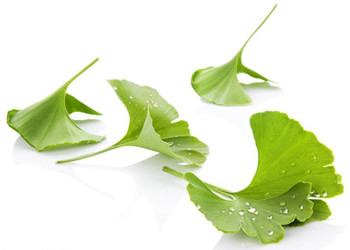 How Can Ginkgo Biloba Ext