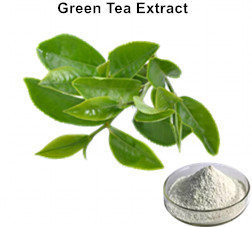 Natural L-theanine Green Tea Extract