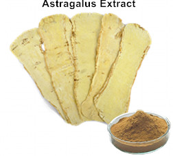 Astragalus Extract