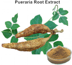 Pueraria Root Extract Flavonoids
